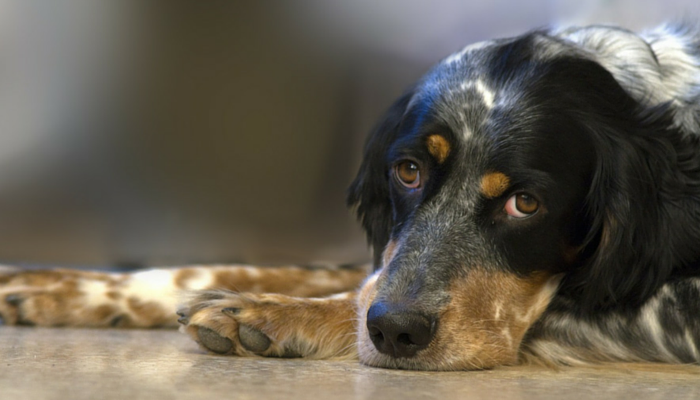 How to Help a New Dog Adjust to Your Home