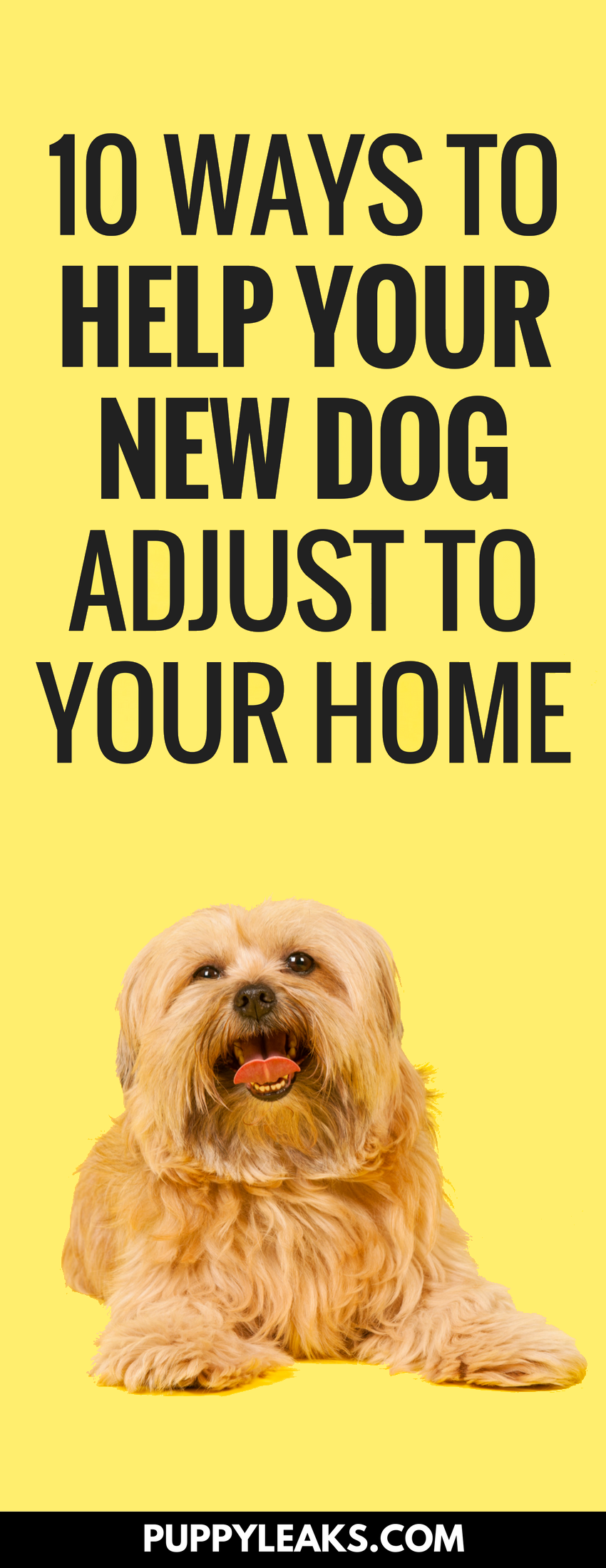 Whether you're getting a new puppy or adopting an older dog you can expect your new four legged family member to take a few days to settle in. These tips will help your new dog adjust to your home, and they'll help start you off on the right foot when it comes to forming a strong bond with your dog. #dogs #dogtips #puppies #puppytips #dogcare #dogadvice
