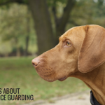 5 Myths About Resource Guarding in Dogs