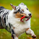 The Importance of Play for Dogs Revealed