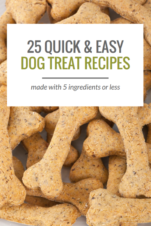 25 Quick & Easy Dog Treat Recipes