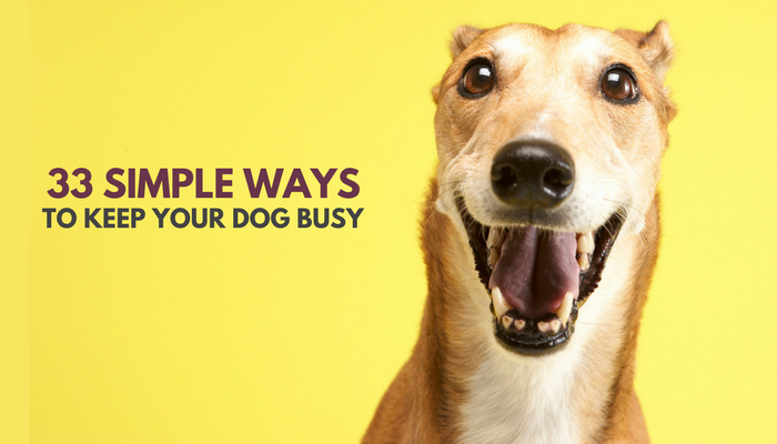 How To Keep Smart Dog Busy At Home