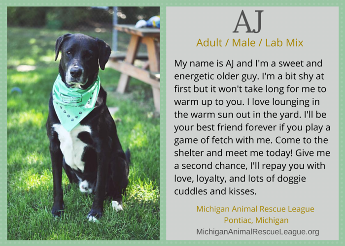 adoptable lab mix michigan