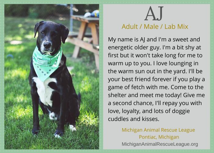 adoptable lab mix michigan
