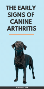 The Early Signs of Canine Arthritis