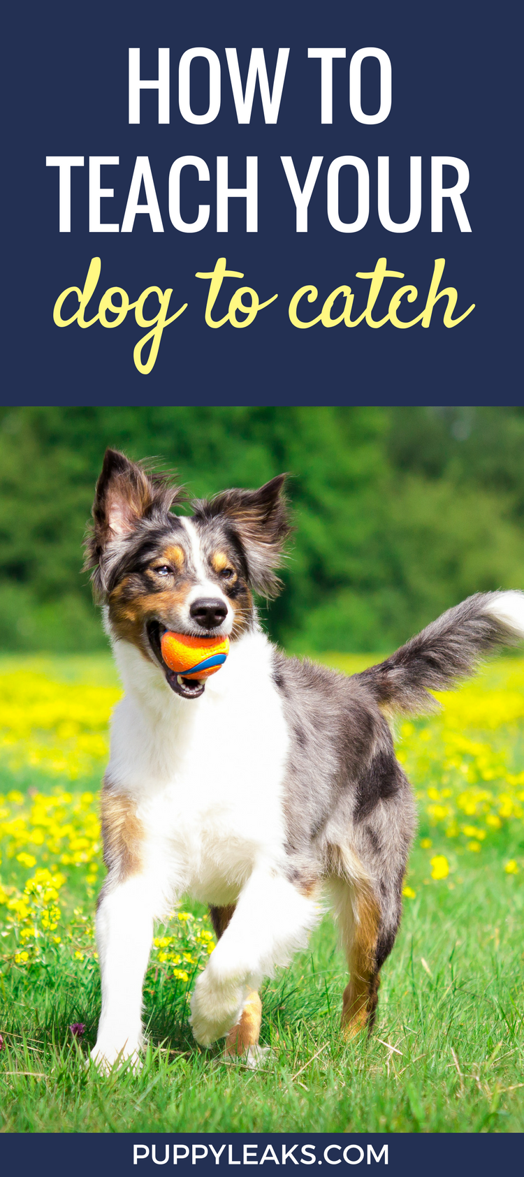 The easy way to teach your dog to catch.