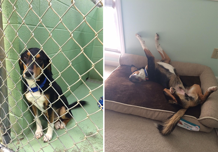 adoption dogs before and after