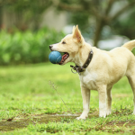 The Simple Way to Teach Your Dog to Catch Like a Pro