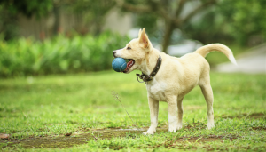 teach your dog to catch