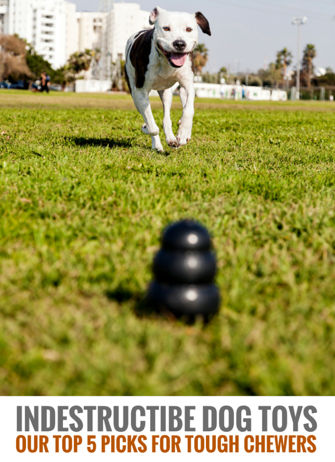 Indestructible Dog Toys Our 7 Favorite Tough Dog Toys