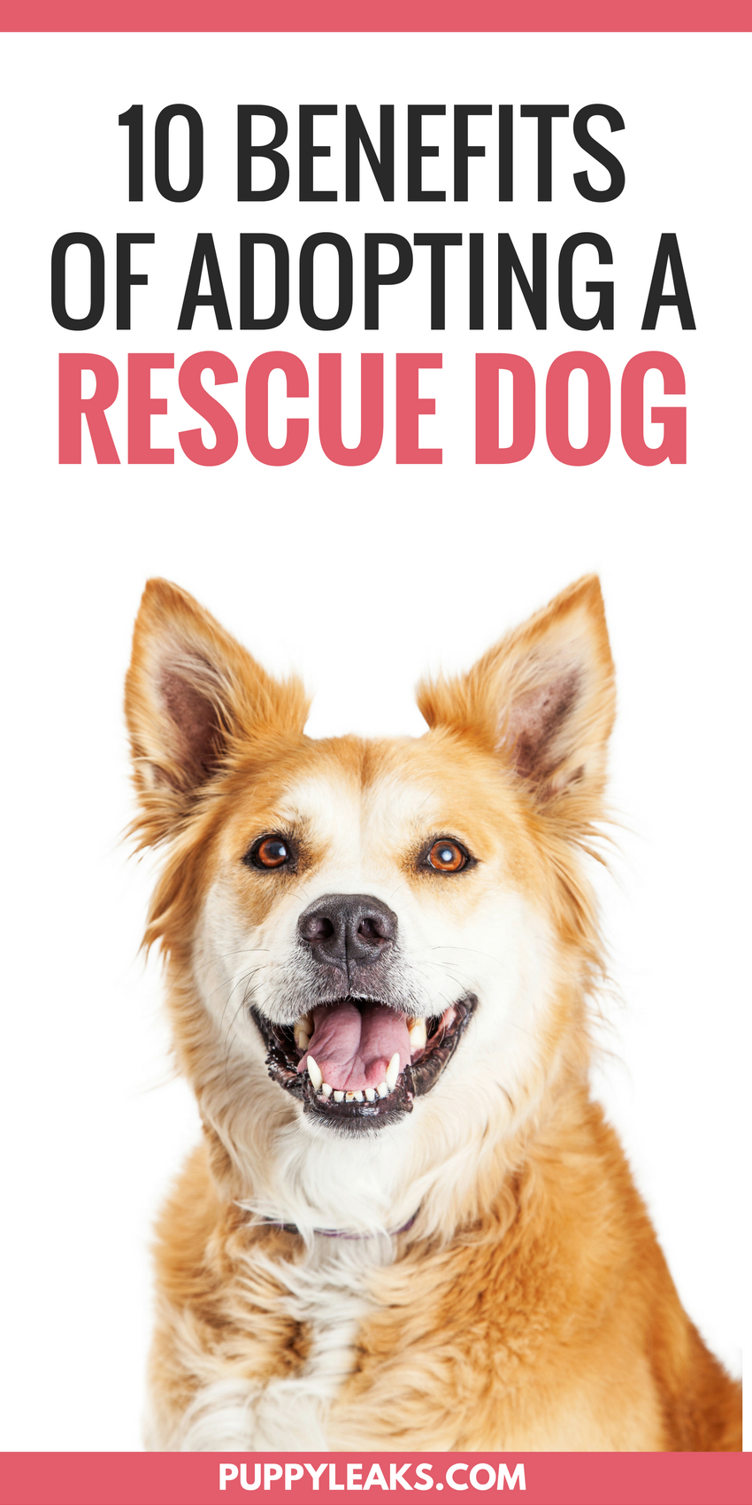 Benefits To Rescuing A Dog