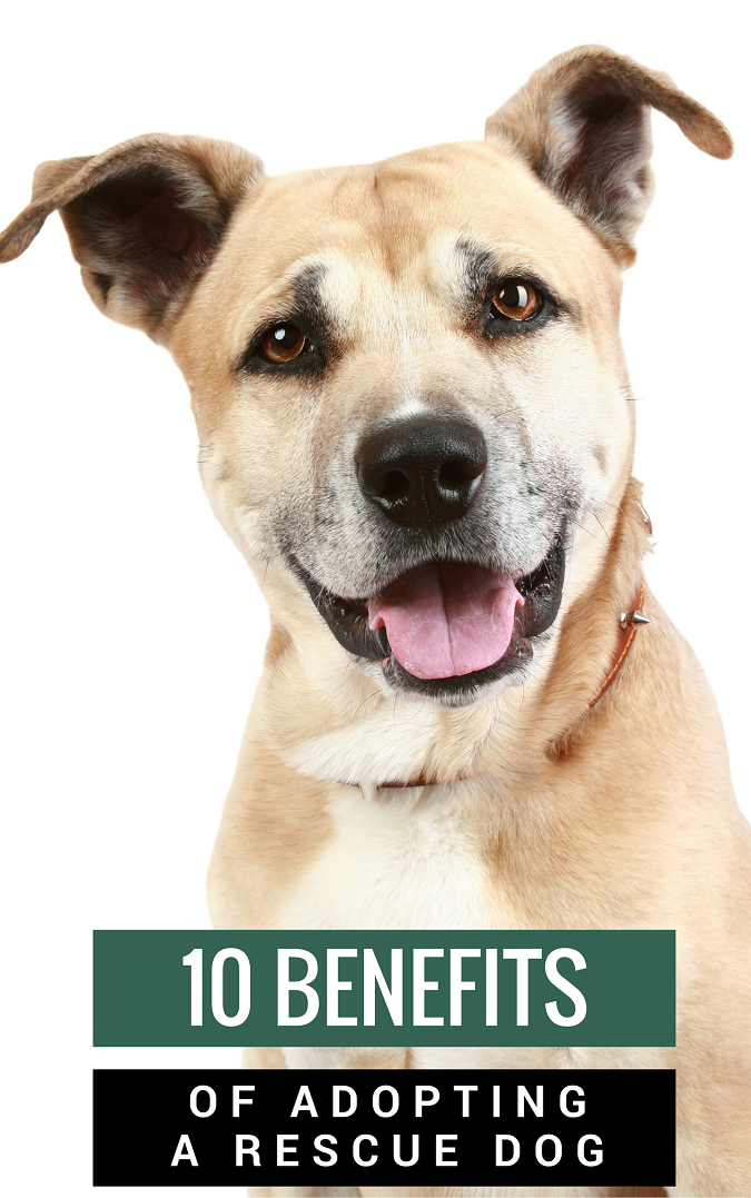 Questions To Ask When Adopting A Rescue Dog