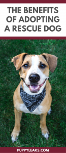 The Benefits of Adopting a Rescue Dog