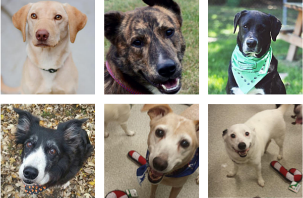 Happy Tails: these awesome Michigan dogs have been adopted.
