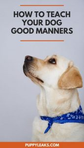 Does your dog have bad manners? Here's how to improve your dogs impulse control and manners.