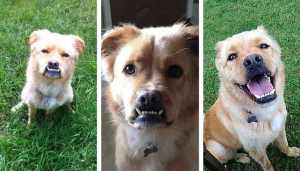 The Perfect Family Dog Is Waiting For You in Detroit