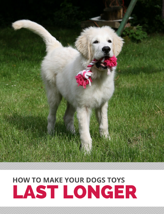 How to make your dogs toys last longer.