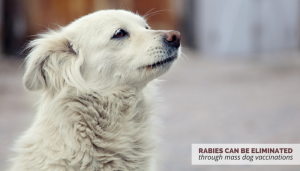 eliminating rabies through mass dog vaccinations
