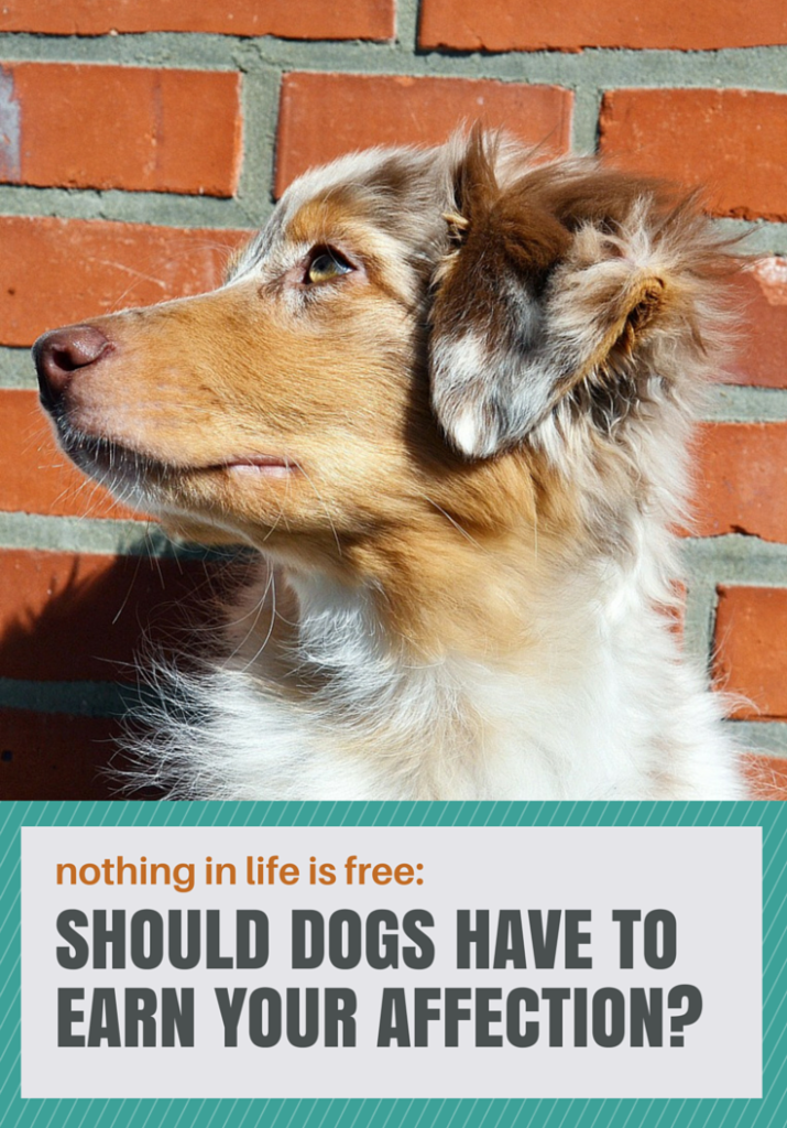 Nothing in life is free: should dogs have to earn your affection?