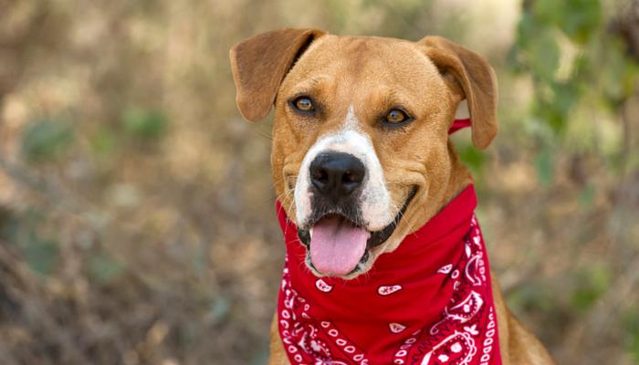 10 Benefits of Adopting a Rescue Dog