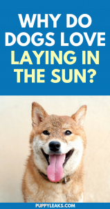 Why do dogs love laying in the sun