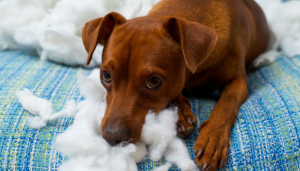 4 Simple Ways to Make Your Dogs Toys Last Longer