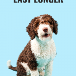 How to make your dogs toys last longer