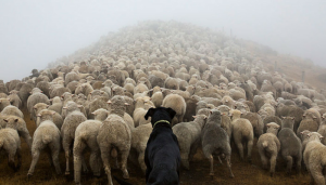 Roundup: The week's best dog articles and news around the web.