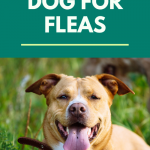 How to check your dog for fleas