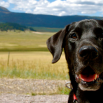 Roundup #4 The Best Dog Articles of the Week