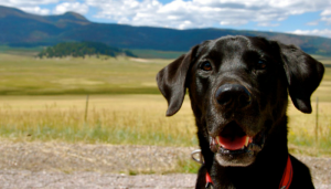 Roundup - The Best Dog Articles of the Week.