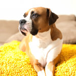 How to Keep Your Furniture Protected From Pets