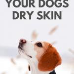 olive oil for dry skin on dog