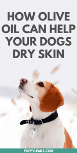 olive oil for dry skin on dog