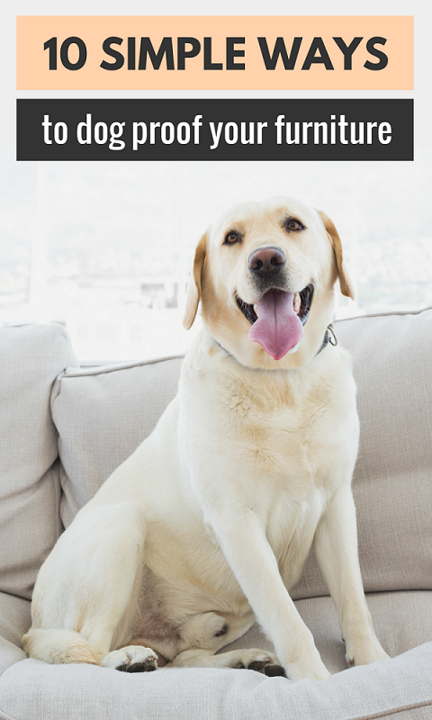 How to keep your furniture protected from your pets. 10 ways to pet proof your furniture.