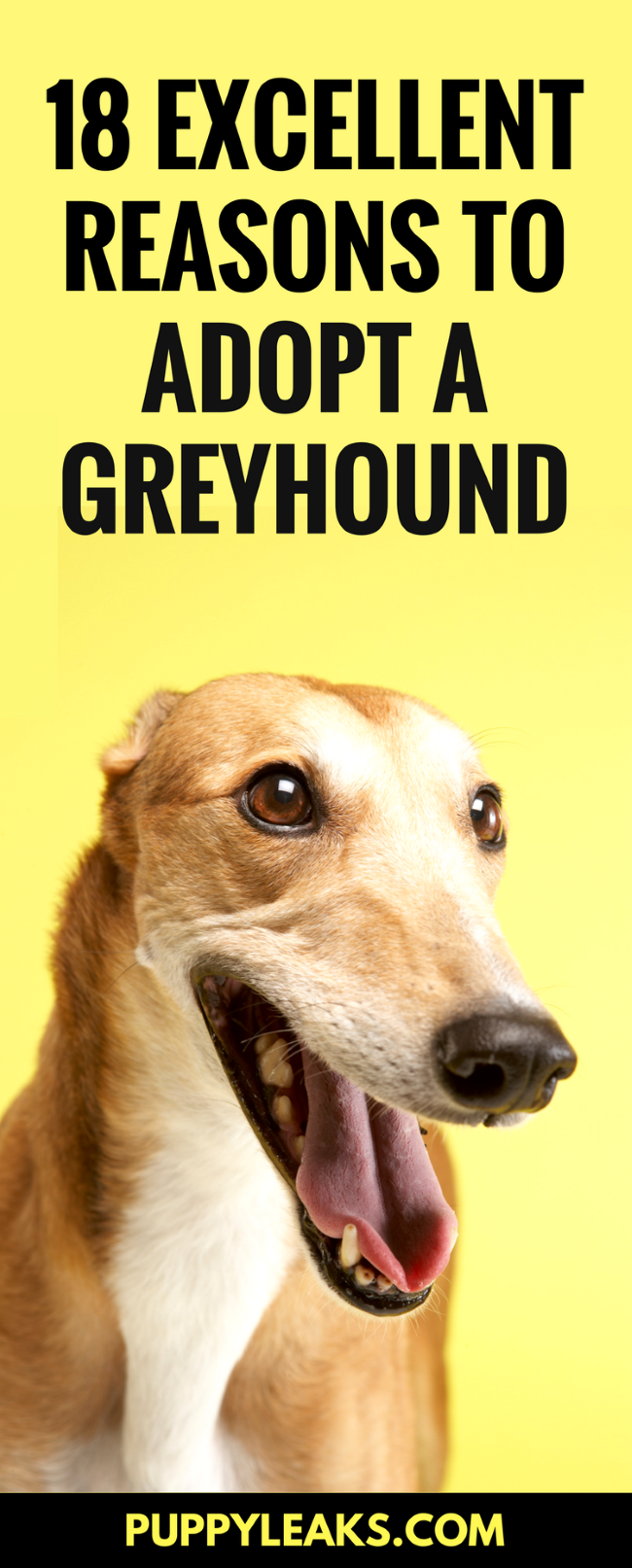 Looking for a laid back dog that's great for apartments? A Greyhound might be the right dog for you.18 Excellent Reasons to Adopt a Greyhound.