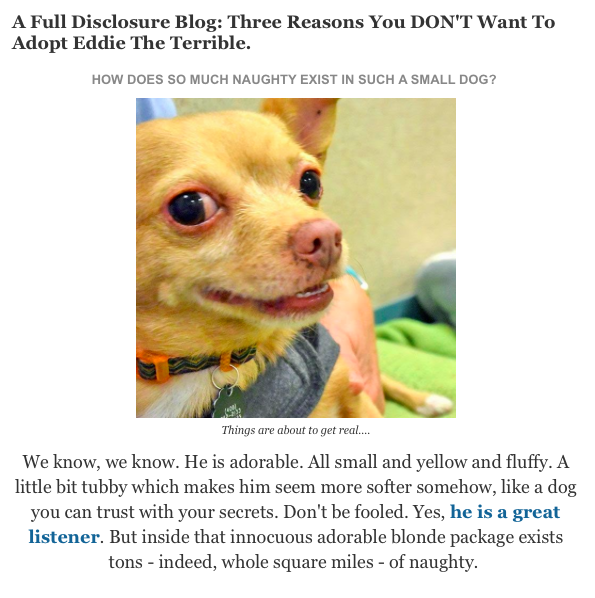 Best Dog Articles of the Week