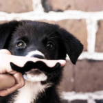 Roundup #11 – Our Favorite Dog Articles of the Week