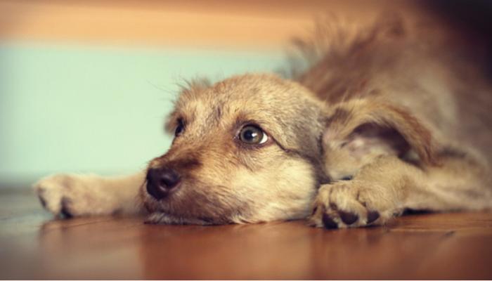 Yelp pour faire votre chien arrêter Biring