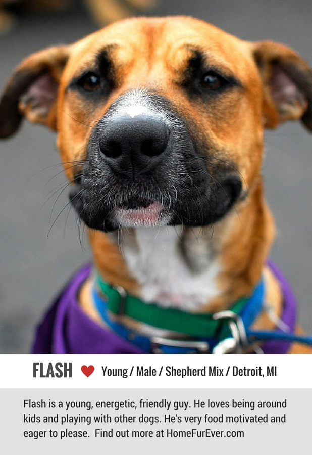 Flash the Friendly Shepherd Mix