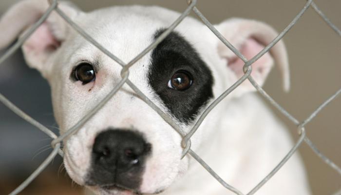 Help End Puppy Mills