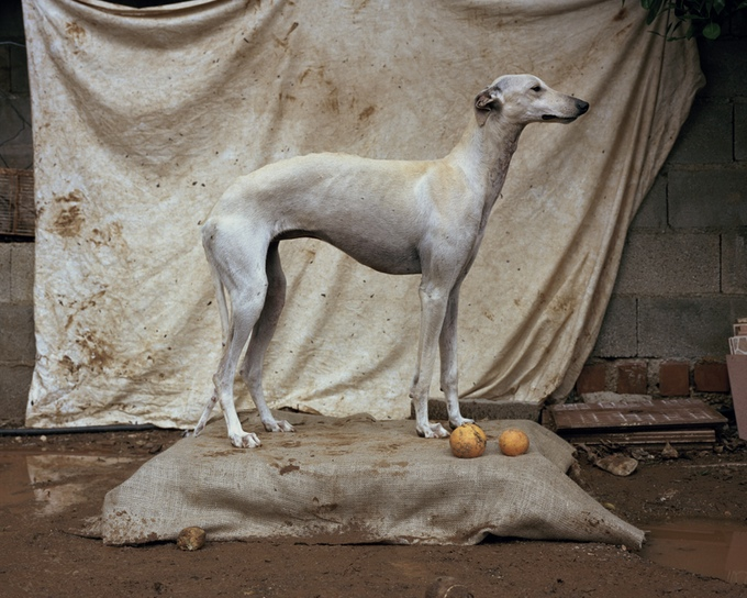 The Story of the Spanish Hunting Dog - A Photography Book