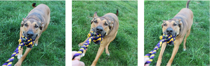 A Game of Tug as Training Reward