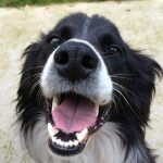 exercises for dogs with arthritis