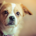 Is There Really a Best Breed For First Time Dog Owners?