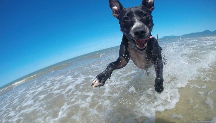 Our Favorite Dog Stories, Deals, and Videos of the Week