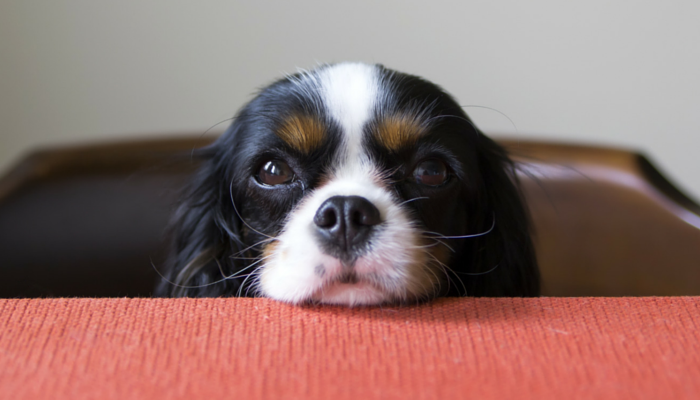 Why Do Dogs Get Eye Boogers?