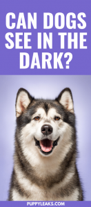 Do dogs have good night vision?