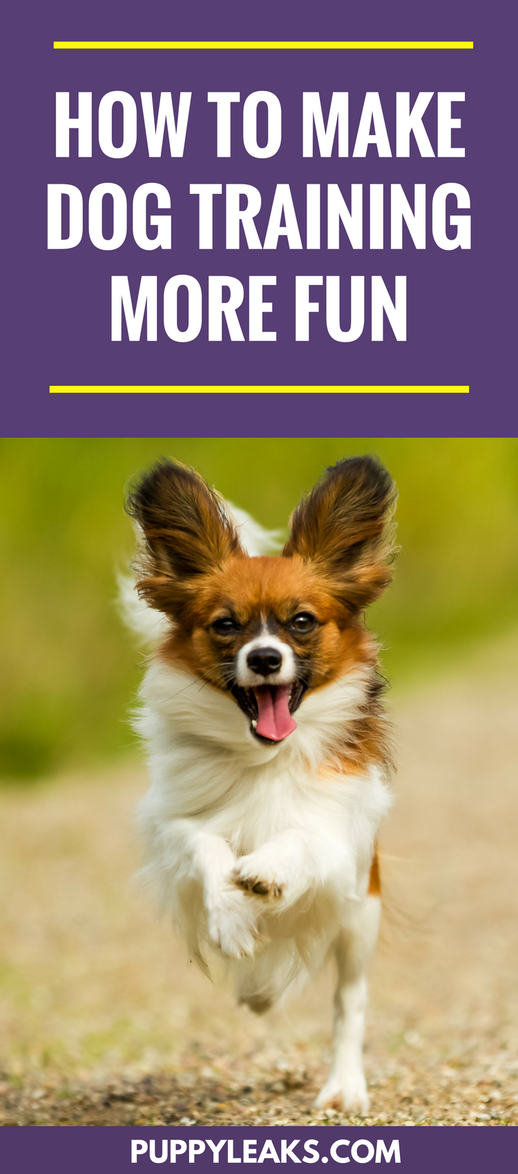 How to make dog training more fun. A few methods that will make training fun for your dog.
