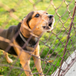 Is a Big Yard Just an Excuse to Ignore Your Dog?